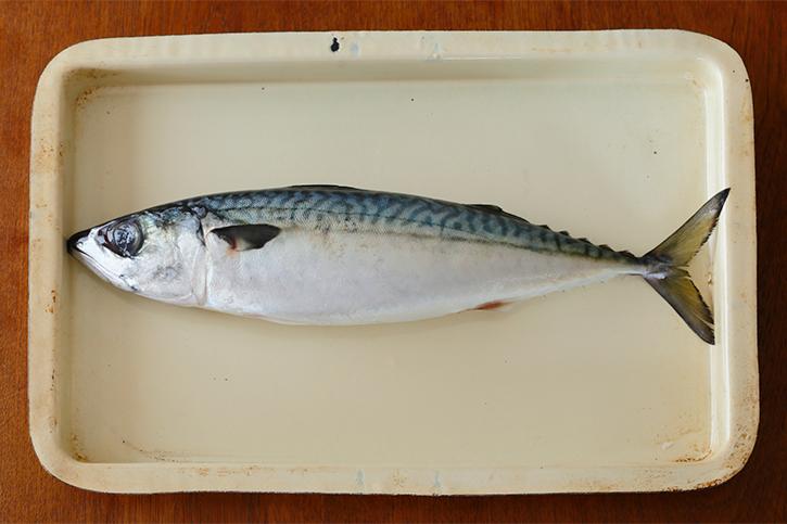 旬の食材「鯖」